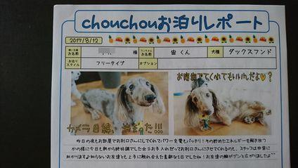 犬の幼稚園シュシュ お泊りレポート