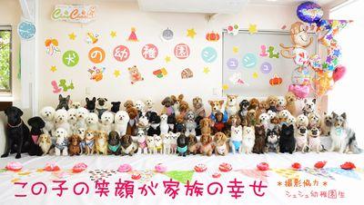 犬の幼稚園シュシュ