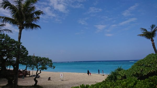 ブセナ海中公園の目の前の海
