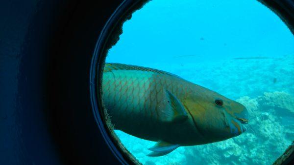海中展望塔から見えるお魚さん