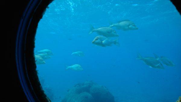 海中展望塔の窓から見えるお魚さん達