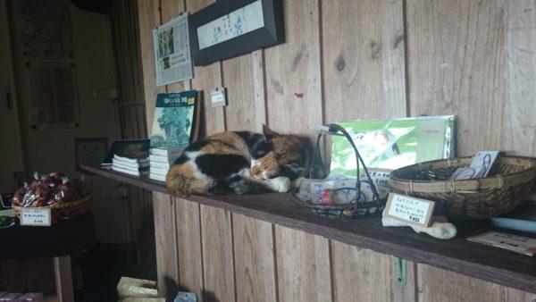 浜辺の茶屋 マスコットの猫ちゃん