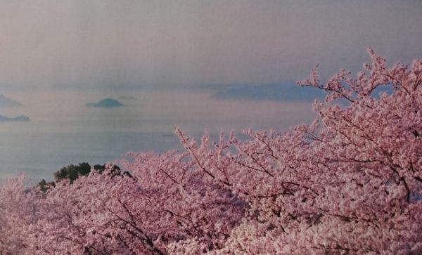 紫雲出山 桜の名所