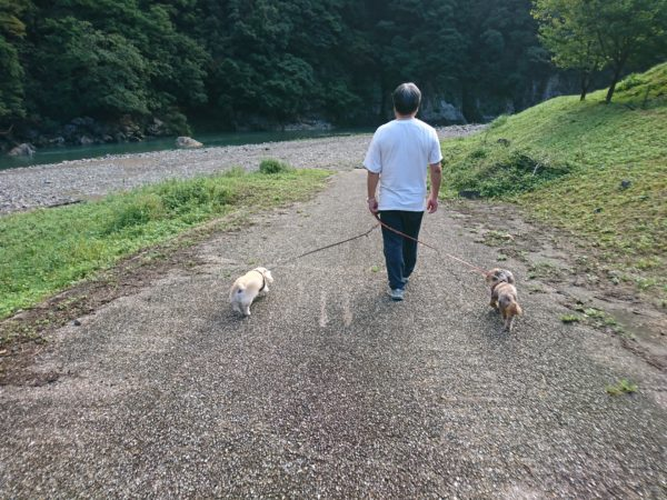道の駅矢田川 RVパーク散歩風景
