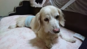愛犬CREAが腎臓病