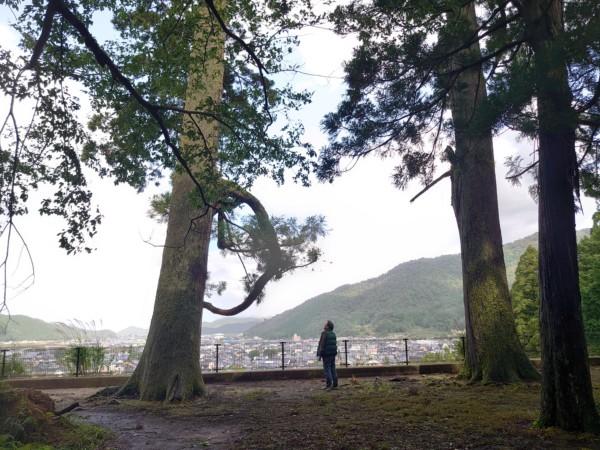 不思議な形の枝の木