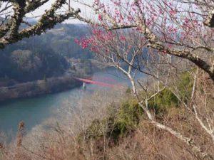 月ケ瀬梅林から見える名張川