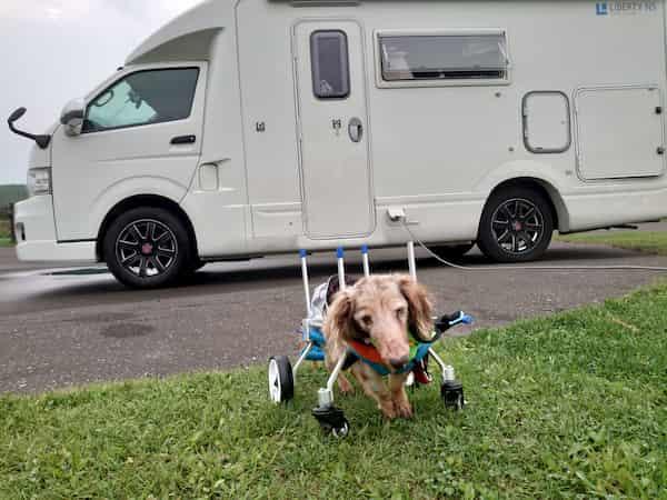 くるま椅子の旅犬「宙(そら)」